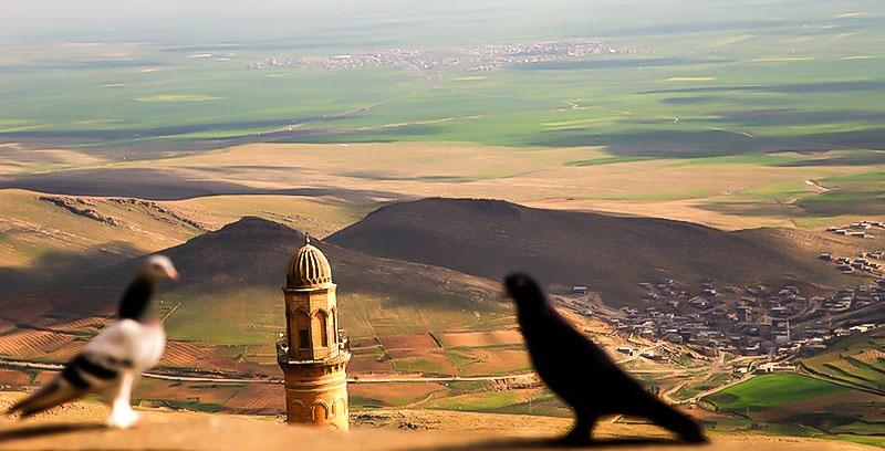 Eger hato Kurd derketin felatê